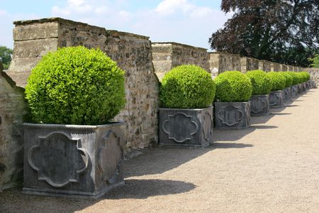 Green circular hedging shrubs in square metal, containers in a line on a path, with old stone walling to the rear. Stock Photo