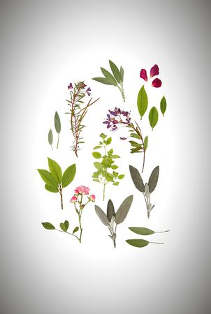 Abstract arrangement of pressed herbs and flowers of summer against a circular gradient silver background. photo