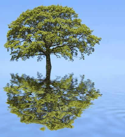 Abstract of an oak tree in summer with reflection in  rippled blue water and set against a clear blue sky. Stock Photo - 3019769