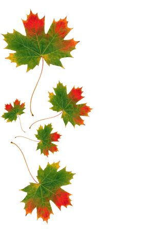 Abstract design of five maple leaves in the colors of Autumn. photo