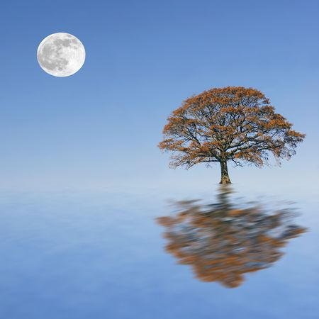 Fantasy abstract of a partially submerged oak tree in autumn set against a background of a full moon and blue sky, reflected over water. photo