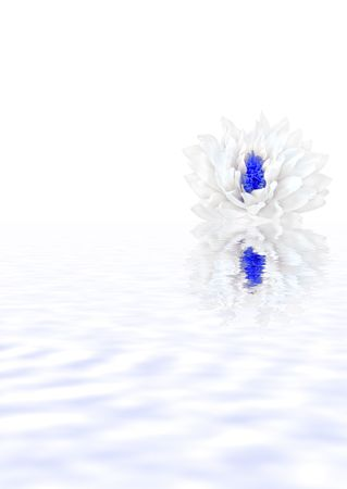 Abstract of a white lotus water lily with blue stamens in full flower with soft blue reflection in water. Set against a white background. Stock Photo - 3058562