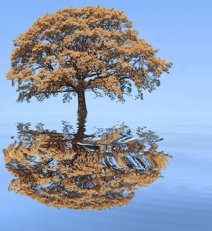 Abstract of an oak tree in autumn with reflection in softly rippled blue water and set against a clear blue sky. Stock Photo - 3111839