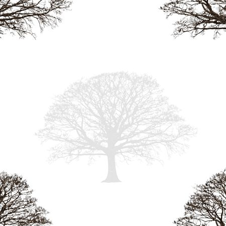winter tree: Abstract illustration of a faded winter oak tree devoid of leaves with branches set at the four corners, set against a white background.