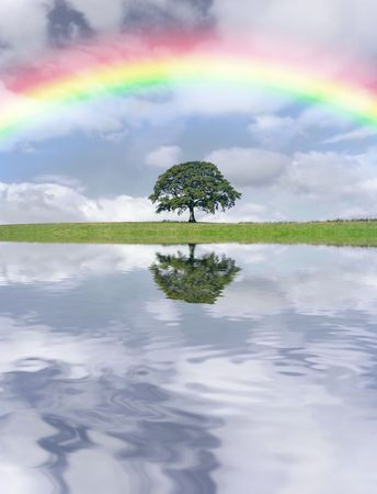 Oak tree in leaf in summer against a stormy sky and rainbow, with reflection in water. Stock Photo - 3142360