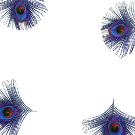 Iridescent eyes of four electric blue and purple peacock feathers set at the corners of the frame, against a white background.