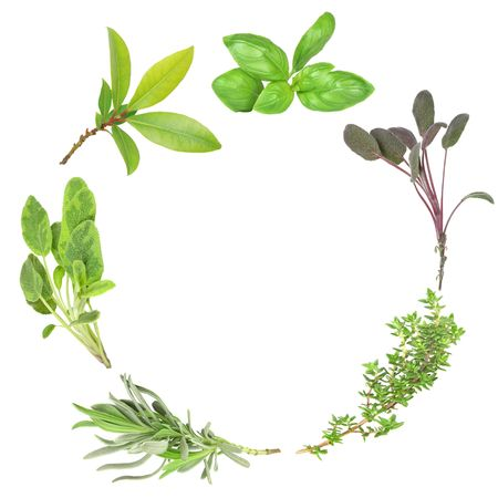 thyme: Organic herb garland of basil, purple sage, common thyme, lavender, variegated sage, and bay set against a white background. (Clockwise order)