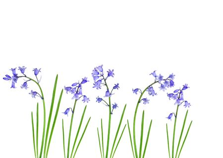 Abstract design of bluebells set against a white background. Stock Photo - 3179517