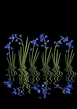 Abstract of bluebells reflected over water and set against a black background. Stock Photo - 3214993