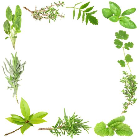 balm: Organic herb border of bay leaves, lavender, sage, golden thyme, valerian, basil, coriander, common thyme, lemon balm, and rosemary. (Clockwise order) Set against a white background.