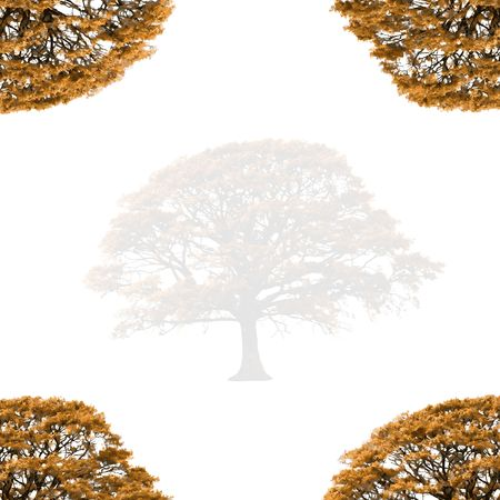 Abstract illustration of a faded  autumn oak tree with branches at the four corners, set against a white background. Stock Illustration - 3267465