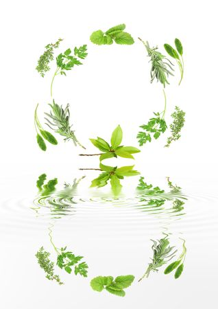 water thyme: Circular design of fresh lavender, sage, parsley, bay, lemon balm and thyme reflected over rippled water and set against a white background.