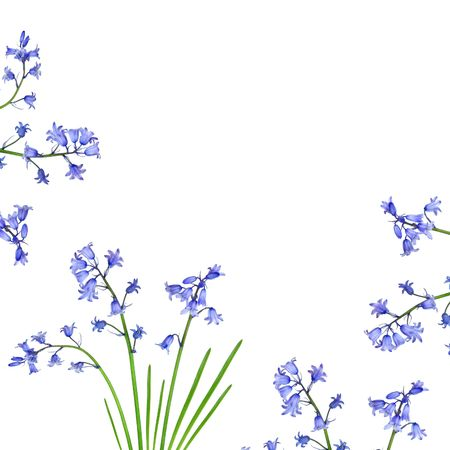 Bluebell flowers forming a border and set against a white background. Stock Photo - 3267455