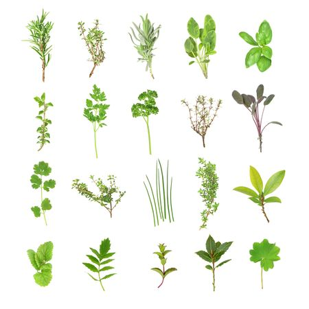 Organic fresh herb selection set against a white background.  photo