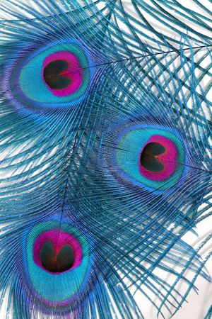 peacock eye: Abstract in blue and red of three peacock feathers, featuring the eyes, overlaid against a white background. Stock Photo