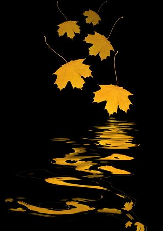 Abstract of two falling maple leaves, one the green of summer, the other, the brown of autumn, with  reflection over rippled water and set against a black background.