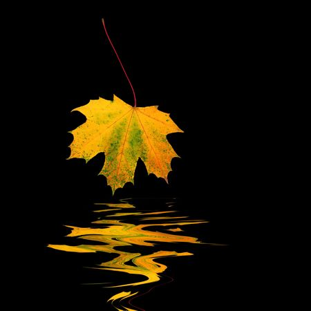 Abstract of a golden autumn leaf with reflection over rippled  water. Set against a black background. Stock Photo - 3324998