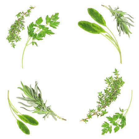 botanical remedy: Lavender, sage, parsley and thyme in a circular frame design over white background.  Stock Photo