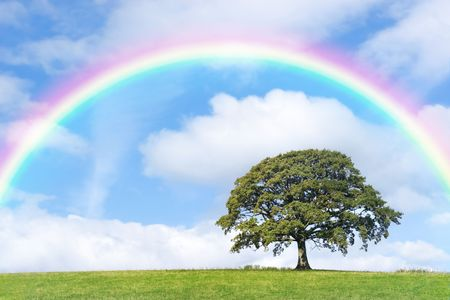 rainbow clouds: Oak tree in summer in a field, with a rainbow, blue sky and clouds to the rear.