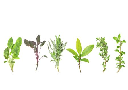 variegated: Organic leaf herb selection of variegated sage, purple sage, lavender, bay,  common thyme and oregano, over white background. From left to right.