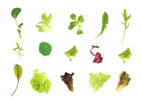 mustard plant: Salad lettuce and herb leaf selection, over white background.