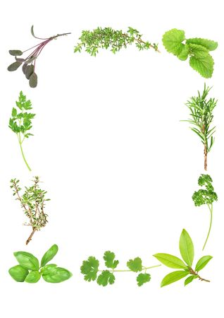Herb leaf selection forming a frame of fresh organic basil, silver thyme, flat leaved parsley, purple sage, common thyme, lemon balm, rosemary, curly parsley, bay and  coriander. Starting bottom left in clockwise order. Over white background. photo