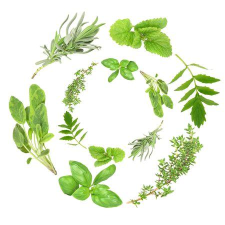 valerian: Herb ghirlande di basilico, variegato salvia, lavanda, limone balsamo, valeriana (vallium sostituto) e timo comune, su sfondo bianco.  Archivio Fotografico