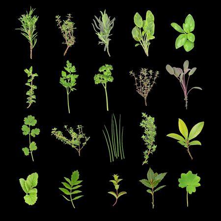 Herb leaf selection over black background.  Stock Photo - 3528091