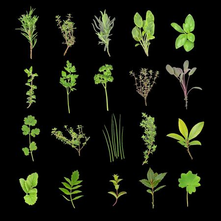 Herb leaf selection over black background. Stock Photo - 3528091