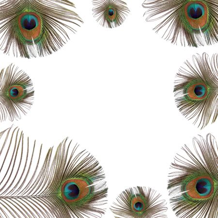 Iridescent eyes of peacock feathers creating a frame, over white background.