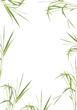 Bamboo grass in an abstract design forming a frame over white background. photo