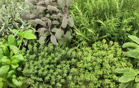 Organic growing herb selection, lavender, purple sage, rosemary, basil, common thyme, golden thyme and variegated sage  Stock Photo - 3561256