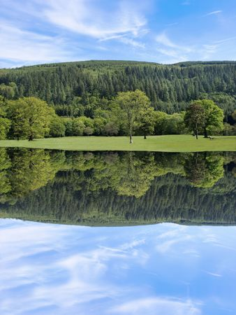 broad leaf: Broad leaf trees of mainly oak in rural meadows in early summer with evergreen pines and a blue sky to the rear, reflected over water.