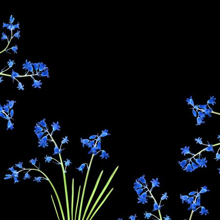 Abstract design of bluebell flowers forming a border, over  black background.