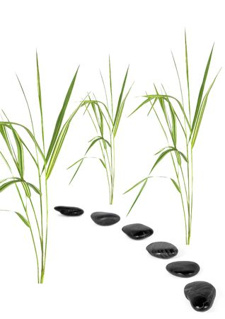 Zen abstract of bamboo grass with a black pebble path, over white background. photo