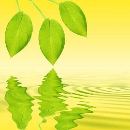 Abstract of three green hosta leaves with reflection over rippled golden water over yellow background. photo