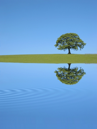 rippled: Oak tree in full leaf in summer in a field,  with reflection  over rippled water , against a clear blue sky.