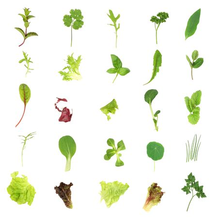 medicinal: Selection of fresh salad lettuce and herb leaves set over white background.