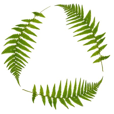 Three green fern leaves forming a triangle symbolizing recycling over white. Stock Photo