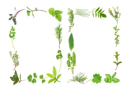 Herb leaf selection forming two borders of sage, thyme, lemon balm ,rosemary, parsley, bay, coriander, thyme, lavender, comfrey, chives, valerian, (vallium substitute) oregano, spearmint, basil, ladies mantle. Over white background. photo