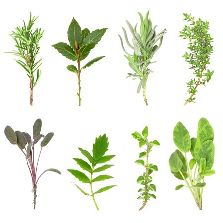 Herb leaf sprigs of rosemary, bay, lavender, thyme, purple sage, valerian, (vallium substitute) oregano and variegated sage over white background.  In order from top left to right.  Stock Photo