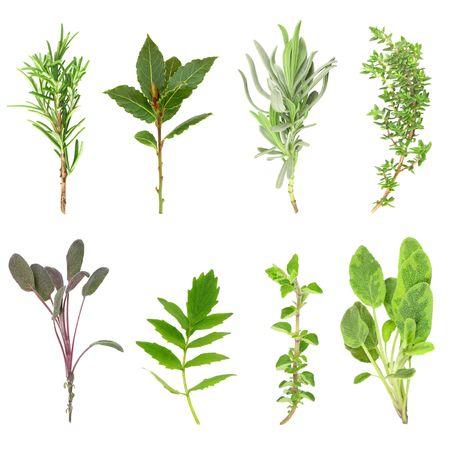 valerian: Herb sprigs foglia di rosmarino, alloro, lavanda, timo, salvia viola, valeriana, (vallium sostituto) origano e salvia su variegato sfondo bianco. In ordine da sinistra in alto a destra.  Archivio Fotografico