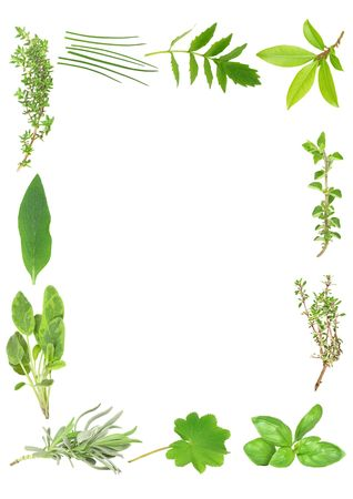 Herb leaf selection forming a border of fresh organic lavender, sage, comfrey, common thyme, chives, valerian (vallium substitute) bay, oregano, silver thyme, basil, and ladies mantle. Staring bottom left on clockwise order. Set against a white background