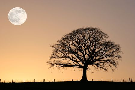 Oak tree in winter at sunset in silhouette against a golden sky with a full moon.