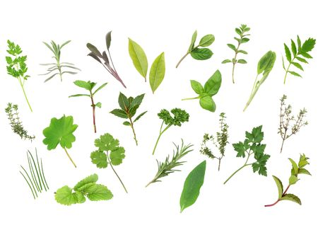Herb leaf selection  of parsley, lavender, sage, bay, mint, oregano, valerian, thyme, ladies, mantle, spearmint, rosemary, chives, lemon, balm, comfrey, basil. Over white background. Stock Photo - 3658042
