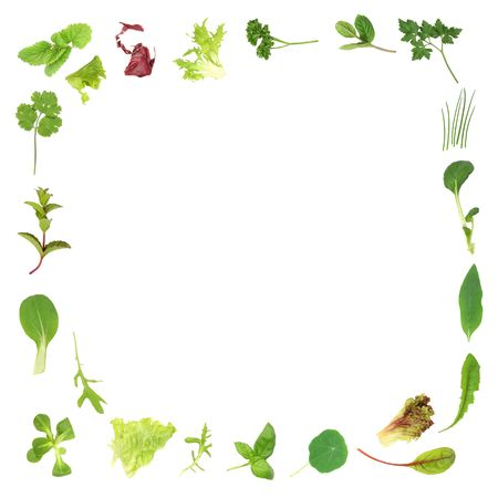 medicinal:  Salad lettuce and herb leaf border, over white background.
