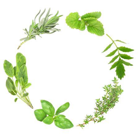 plantas medicinales: Guirnalda de hojas de hierba de albahaca, sabio variegada, lavanda, b�lsamo de lim�n, valeriana (suplente de valium) y tomillo com�n, sobre fondo blanco.