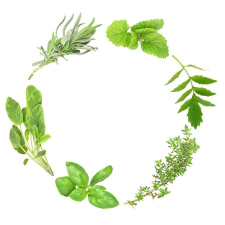 Herb leaf garland of basil, variegated sage, lavender, lemon balm, valerian (valium substitute) and common thyme, over white background. Banco de Imagens