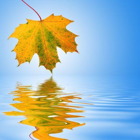 Hoja de arce de diseño abstracto en el otoño de colores con la reflexión sobre rippled agua. Más de fondo azul cielo con blanco resplandor central.