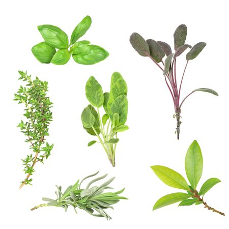 Herb leaf selection of basil, purple sage, common thyme, variegated sage, lavender and bay, over white background. Stock Photo